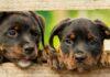 Nueva ley tomará medidas contra los criaderos en Reino Unido