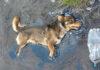 Perrito atrapado en alquitrán no dejaba de pedir ayuda