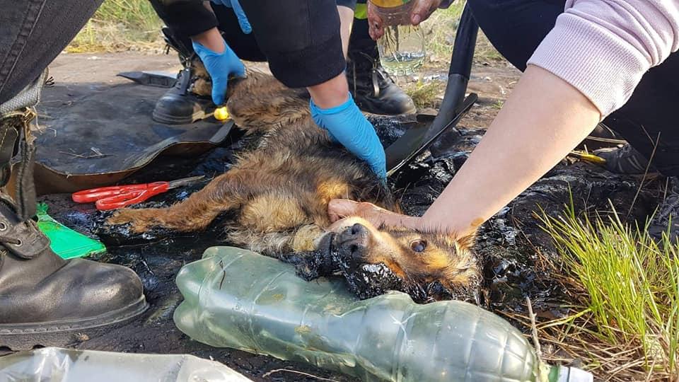 Perrito atrapado es rescatado