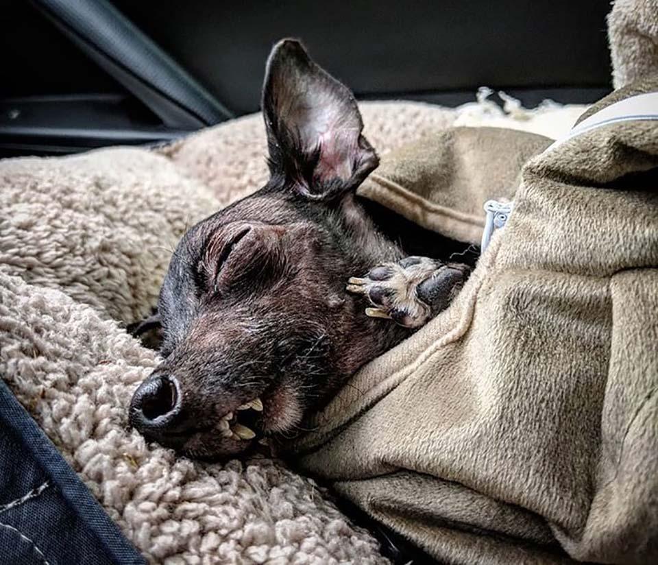 Perrito descansa
