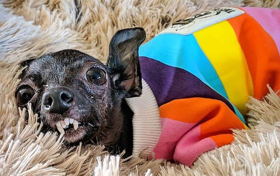 Perrito especial con atuendo de colores