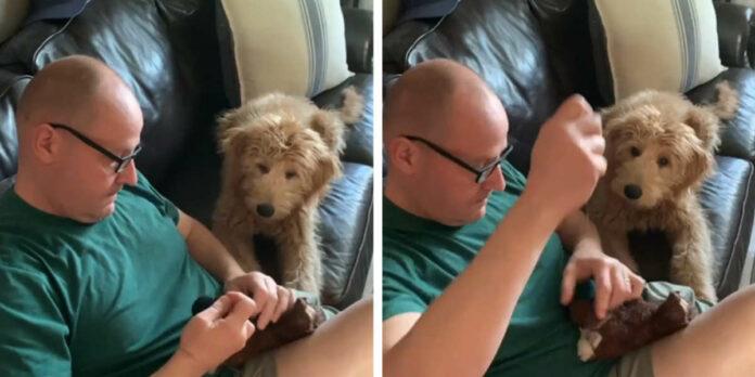 Perrito preocupado espera pacientemente que reparen su juguete