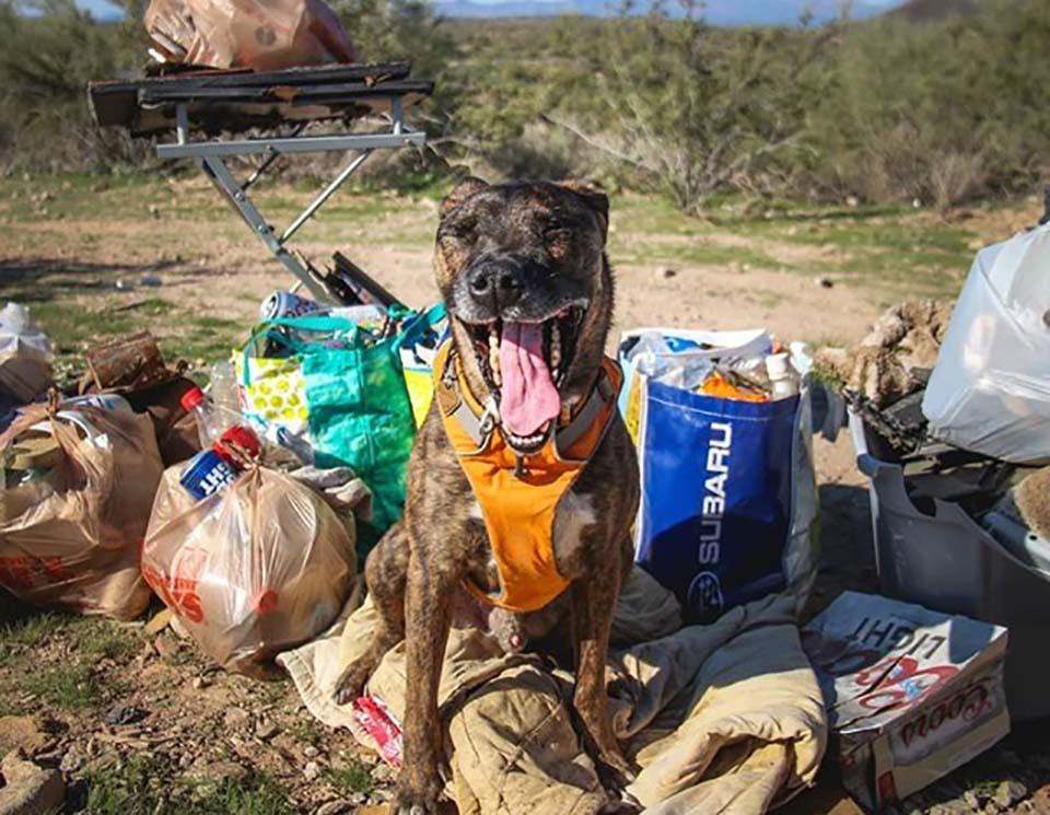 Perrito recolecta basura