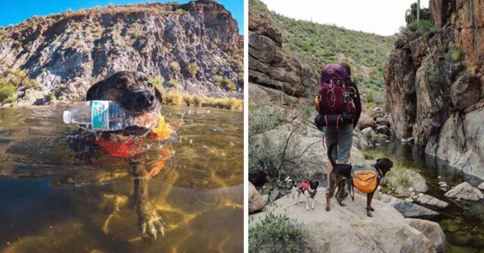 Perrito viaja y recolecta basura en ríos y parques con su mamá adoptiva