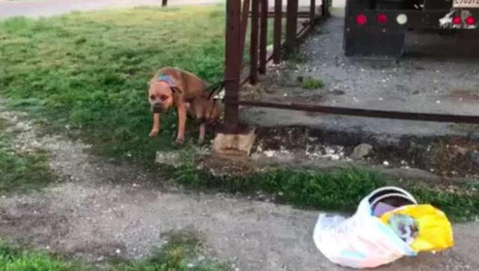 Perro abandonado enredado con su correa junto a sus pertenencias