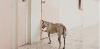 Perro espera por semanas el regreso de su difunto maestro