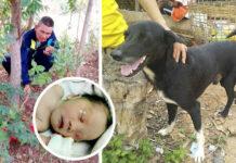 Perro héroe rescata a un bebé recién nacido enterrado por su madre
