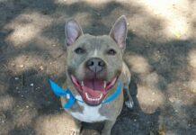 Perro lleva esperando un hogar por mas de 981 días