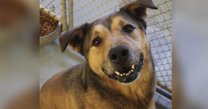 Perro que pasó 2381 días en el refugio ahora es feliz