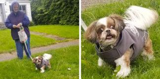 Perro tiene la reacción más graciosa al encontrarse con su peluquero en la calle