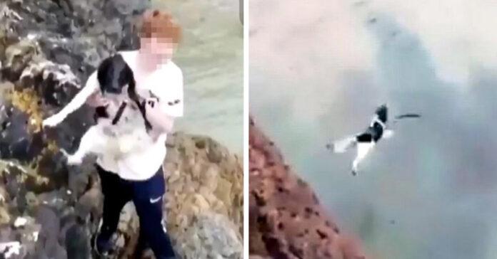 Policía investiga a sospechoso que arrojo a un perro desde un acantilado