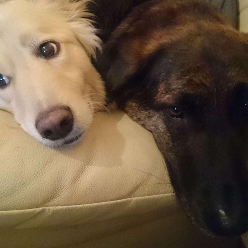 Rocky y Spencer