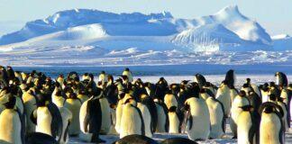 Una de las colonias más grandes de pingüino emperador desaparece