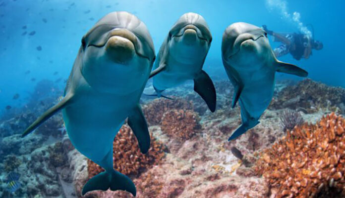 Canada prohibe ballenas y delfines en cautiverio