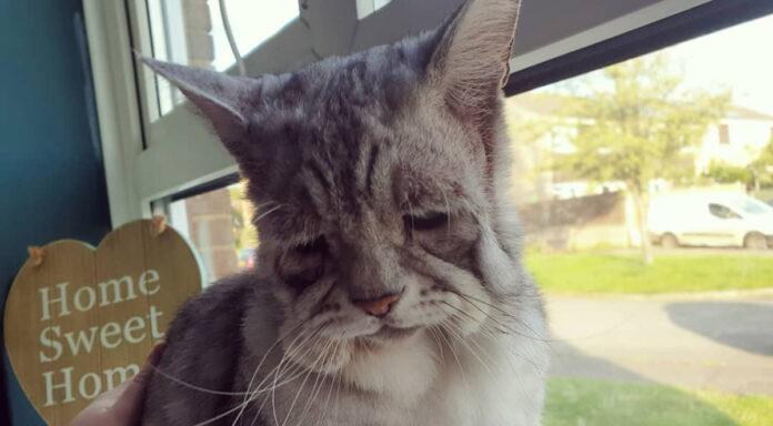 Gatito con rara condición es muy feliz de ser adoptado