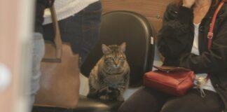Gato huye de casa para ir al velorio de su amiga