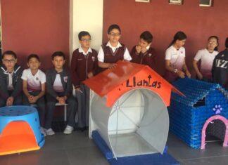 Niños hacen casas para perritos sin hogar con material reciclable