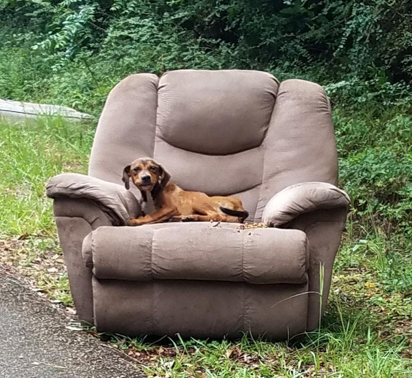 Pequeño perro abandonado encima de sillón