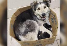 Perrita es abandonada en una caja con sus 9 cachorros