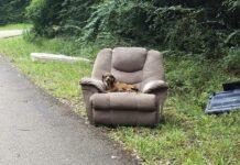 Perrito abandonado junto al sillón y el televisor