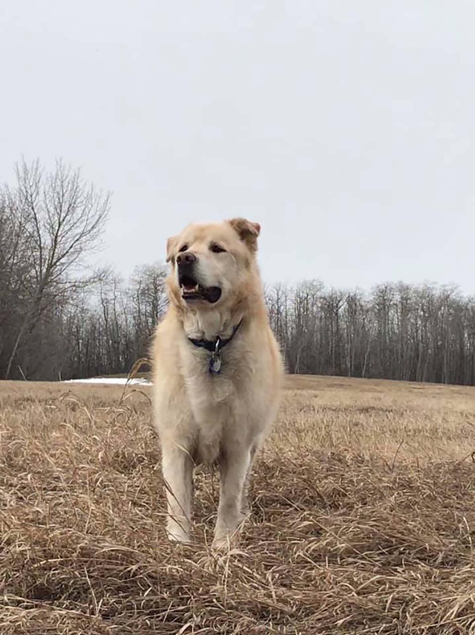 Perrito disfruta el aire libre