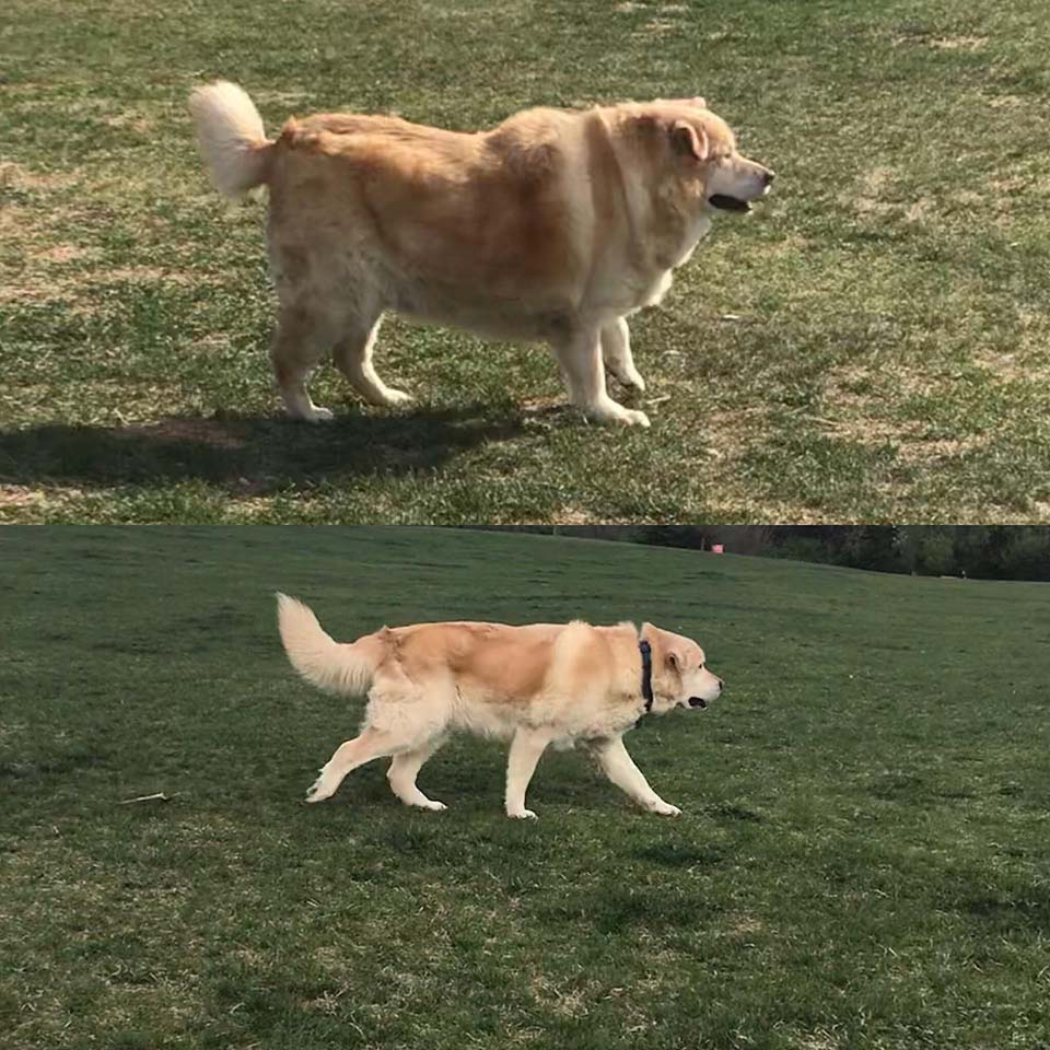Perrito tenía sobrepeso