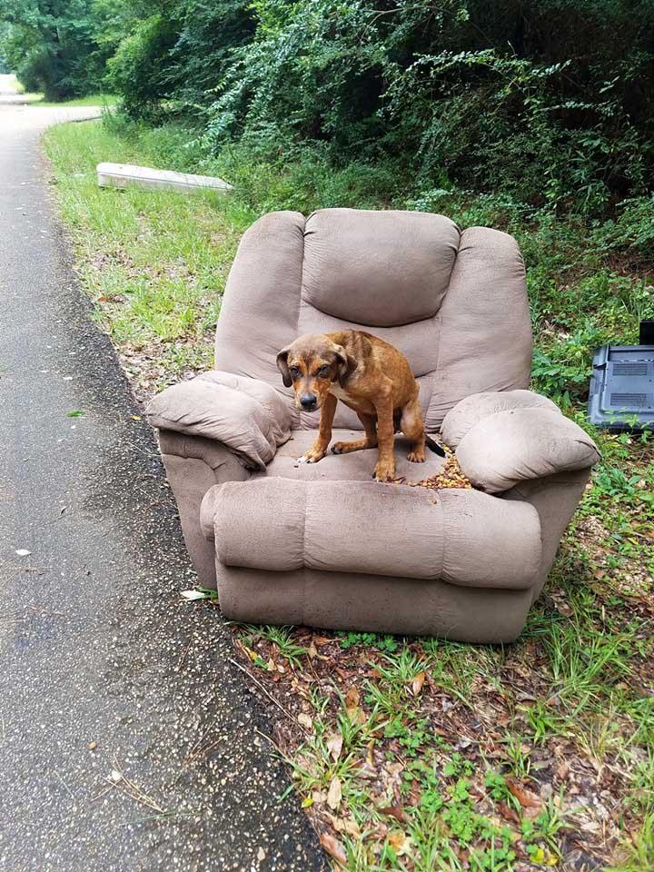 Perro abandonado con el sofá