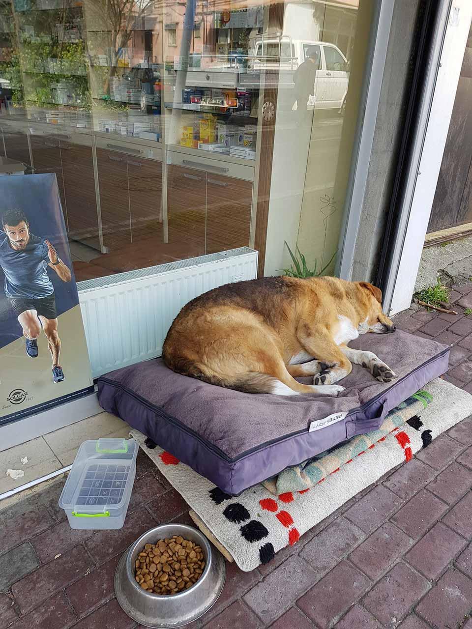 Perros fuera de farmacia