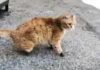 Primer gato con 4 prótesis en sus patas