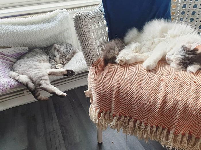 Toby y su mejor amigo
