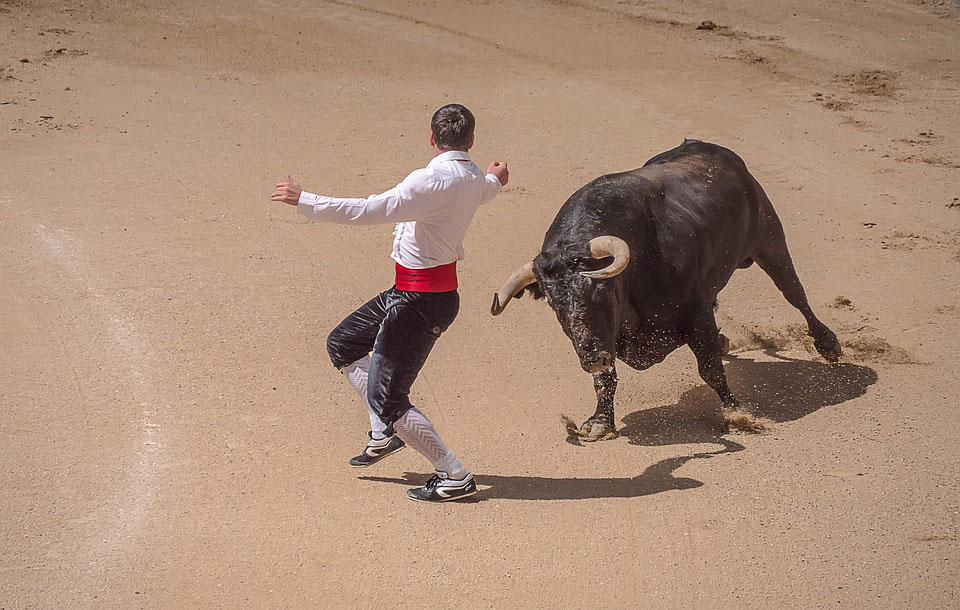 Toro defendiéndose