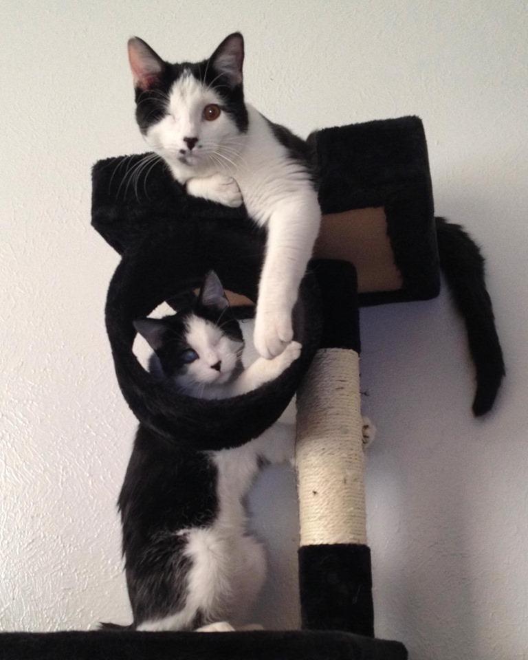 Ace y su hermano