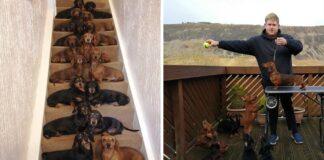 Adolescente logró capturar la foto perfecta de sus 16 perros salchicha