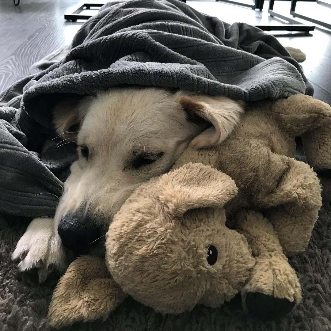 Barley duerme con Fluffy