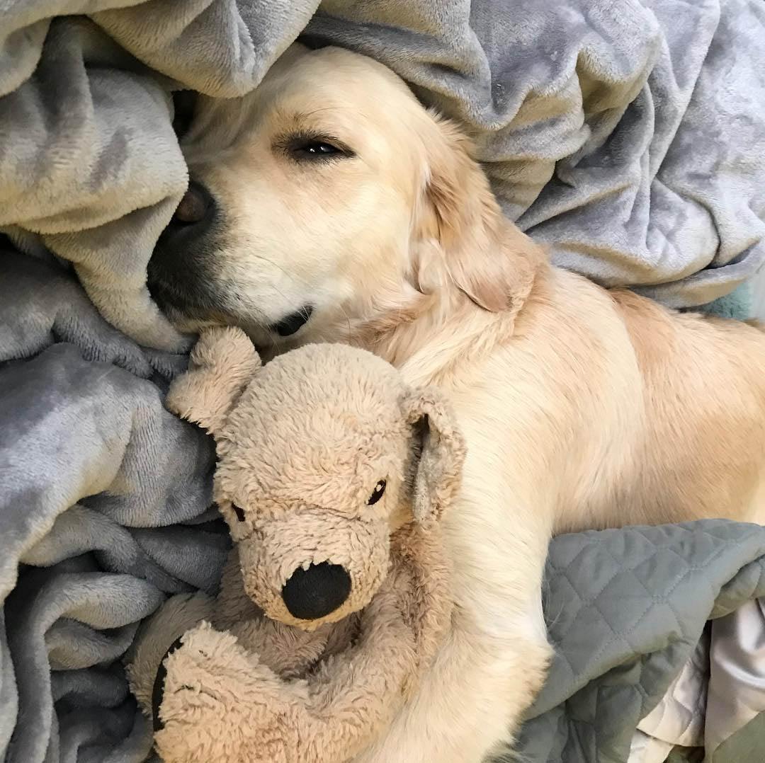 Barley durmiendo con Fluffy