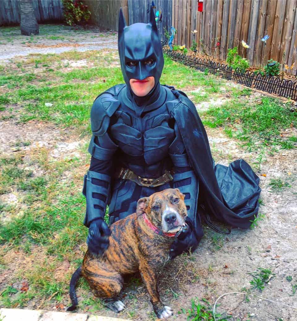 Batman rescata a pitbull y lo lleva a un hogar para siempre