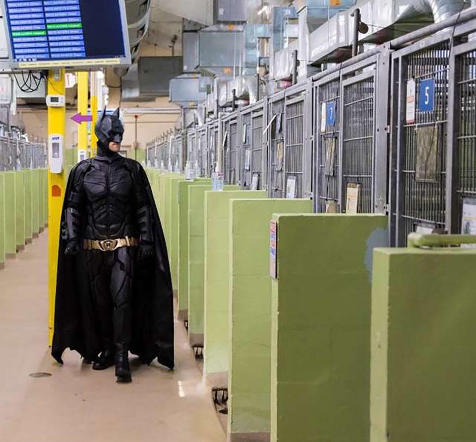Batman visita un refugio para perros