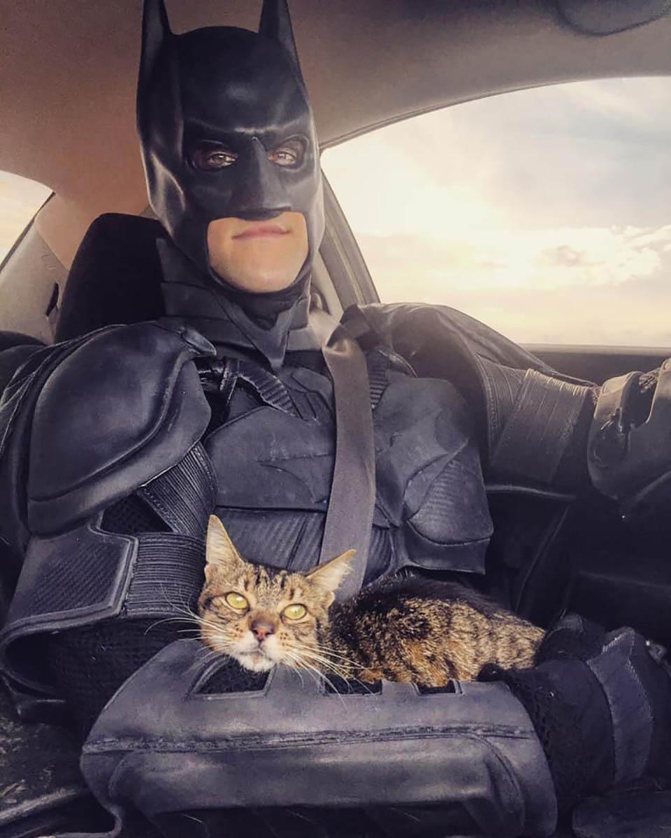 Batman y lindo gatito en el auto