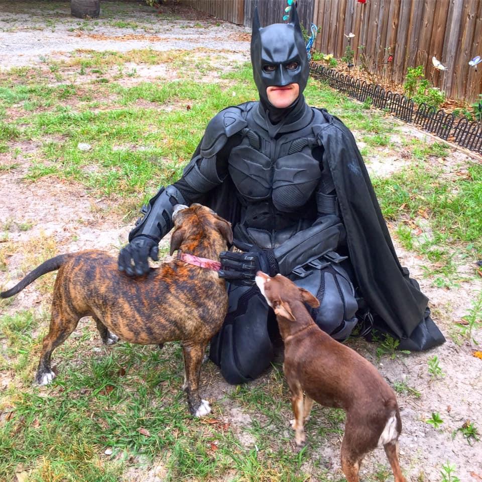 Batman y un par de perros