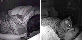 Chico instala cámara oculta para ver que hace su gatito mientras duerme