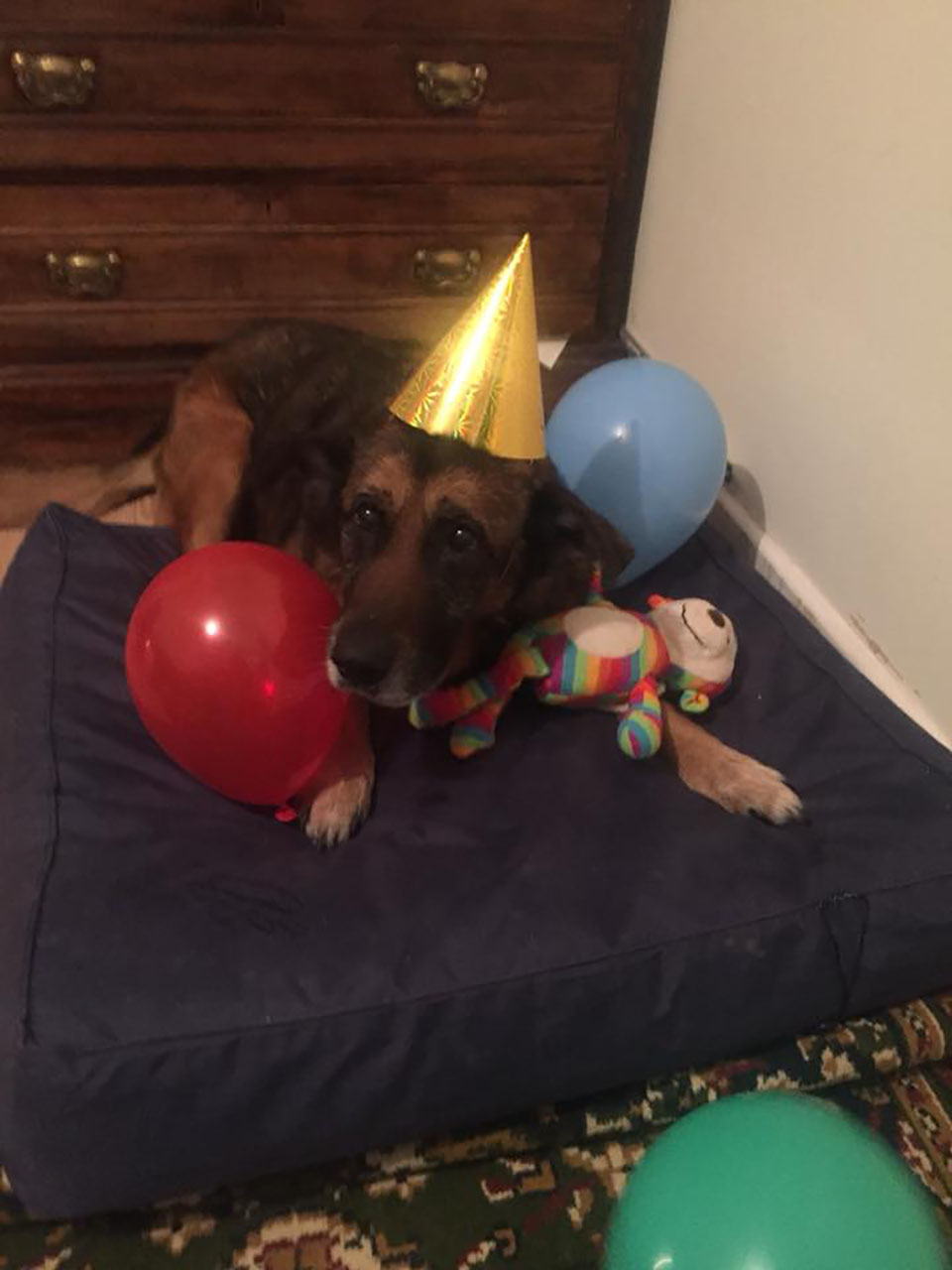 Cumpleaños perrito