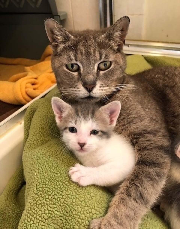 Delancey y su bebé