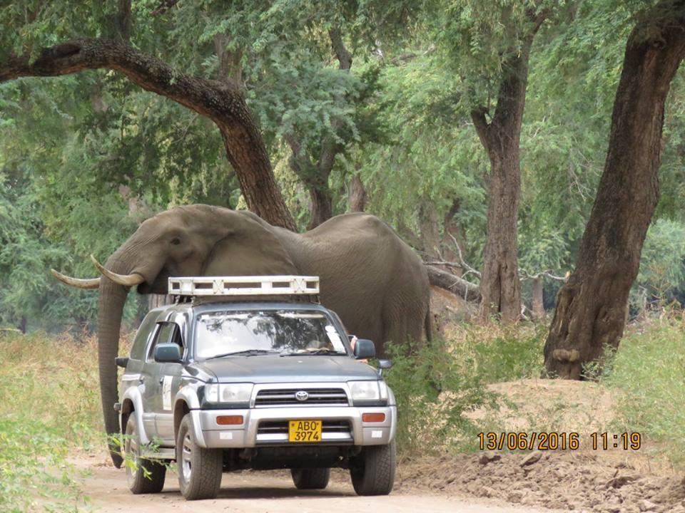 Elefante es amigable con las personas