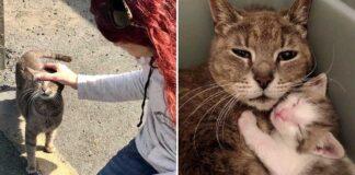 Esta gatita es feliz de ser rescatada junto a sus bebés