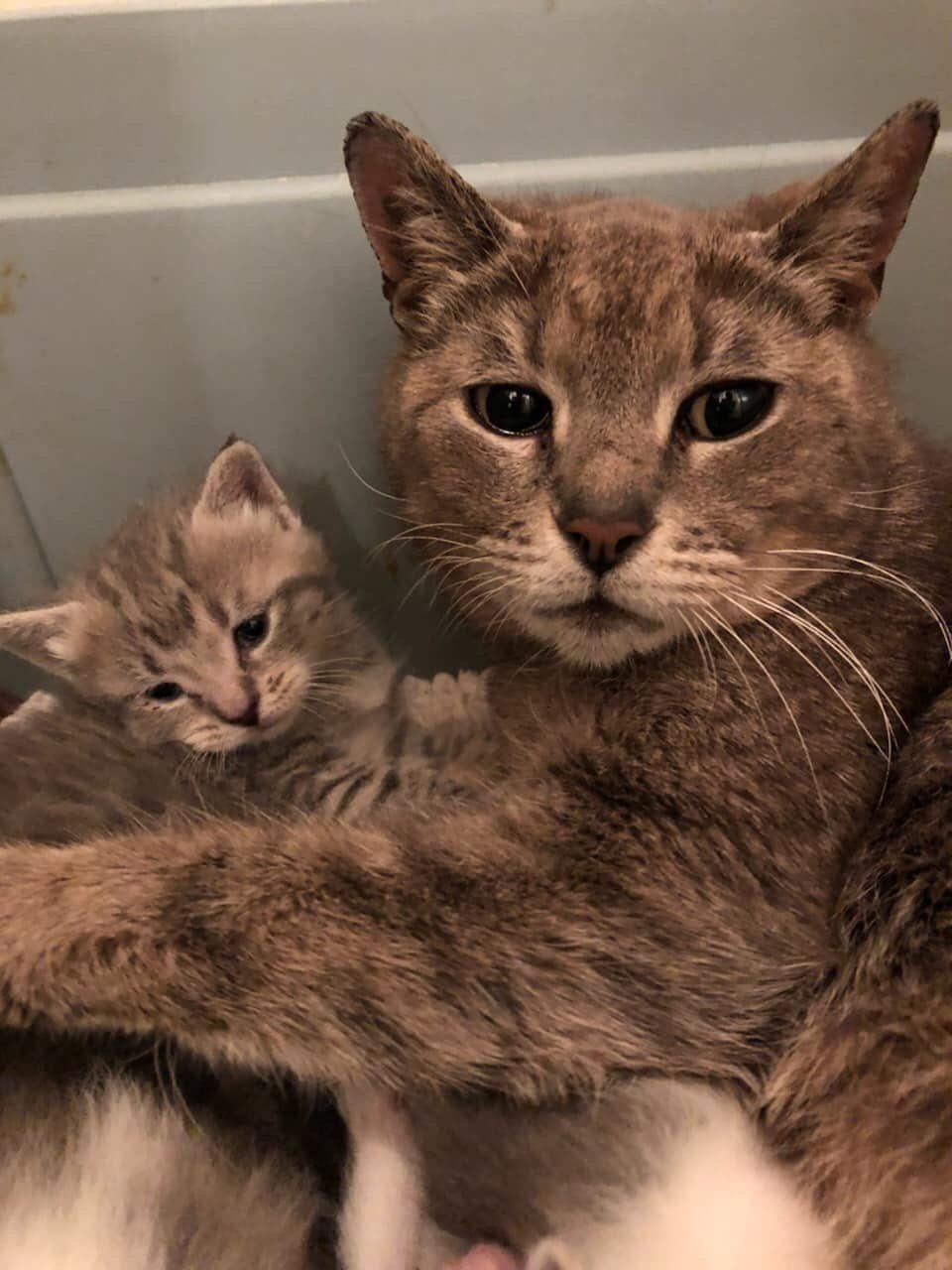 Felina y su bebé