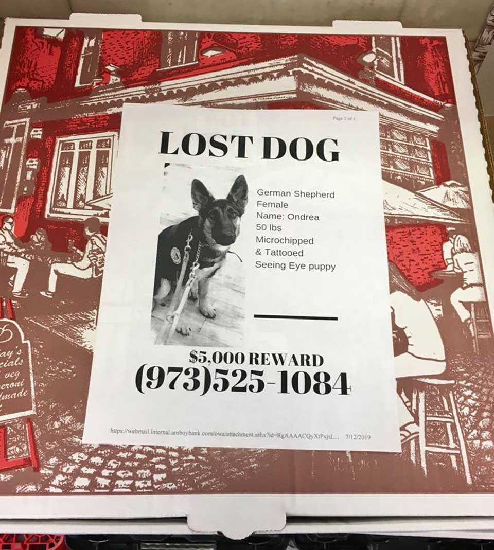 Folleto de perro perdido
