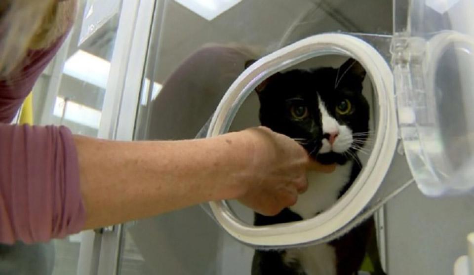 Gatito recibe cuidados