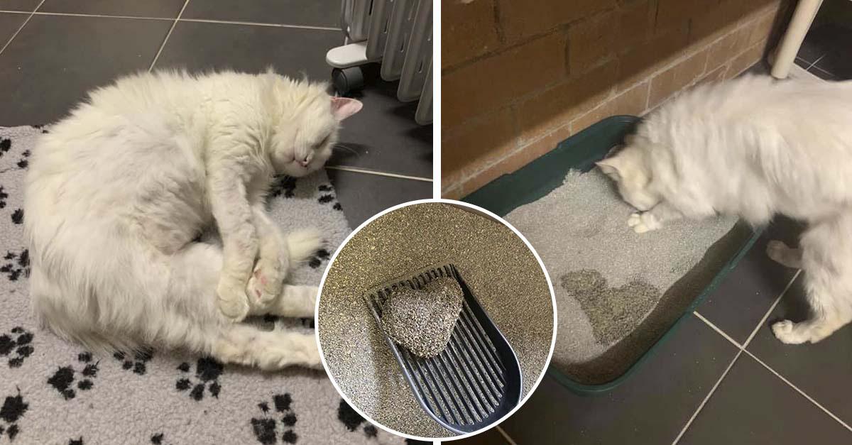 Gatito rescatado hace pis en forma de corazón