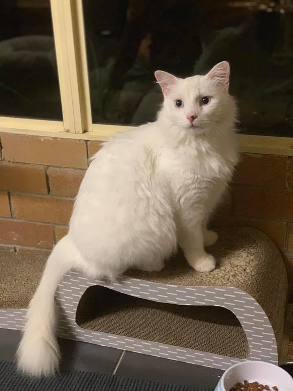 Gatito rescatado
