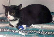 Gatito sobrevive después de colarse en la lavadora en un ciclo de lavado